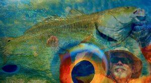 David Fields Fishing The Americas